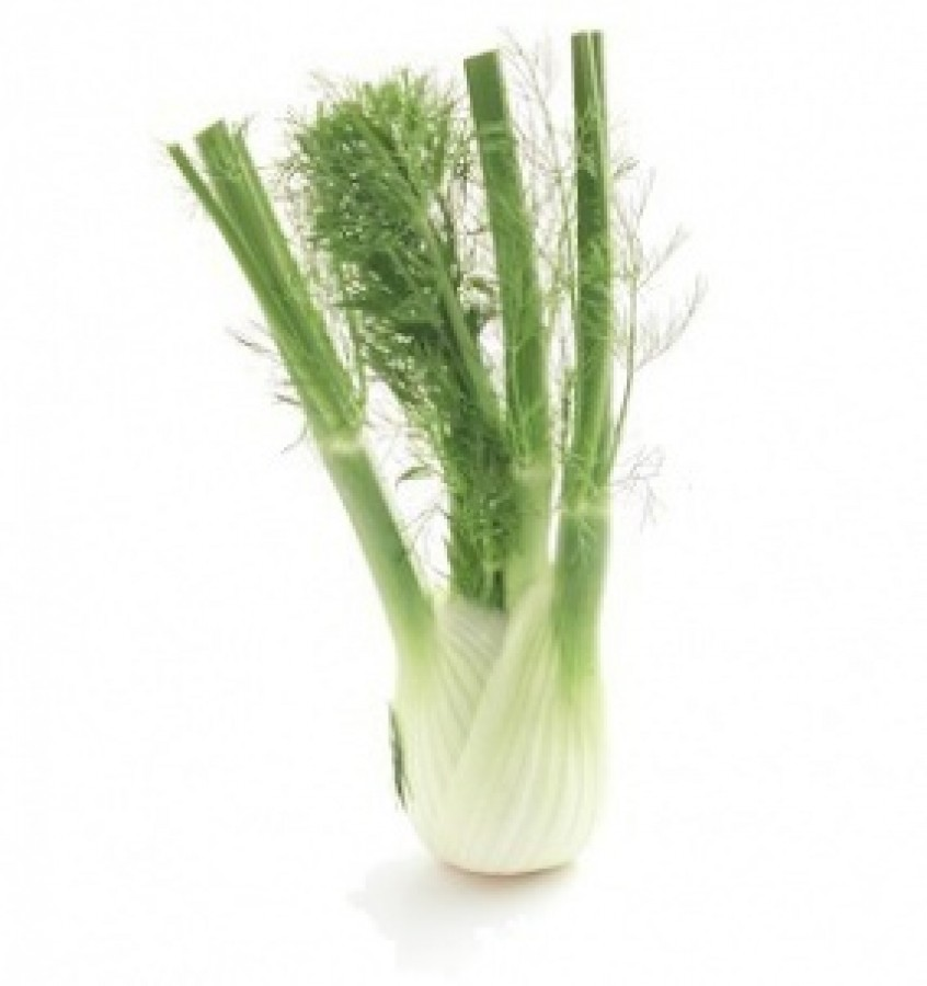 Fennel bulb nutrition facts