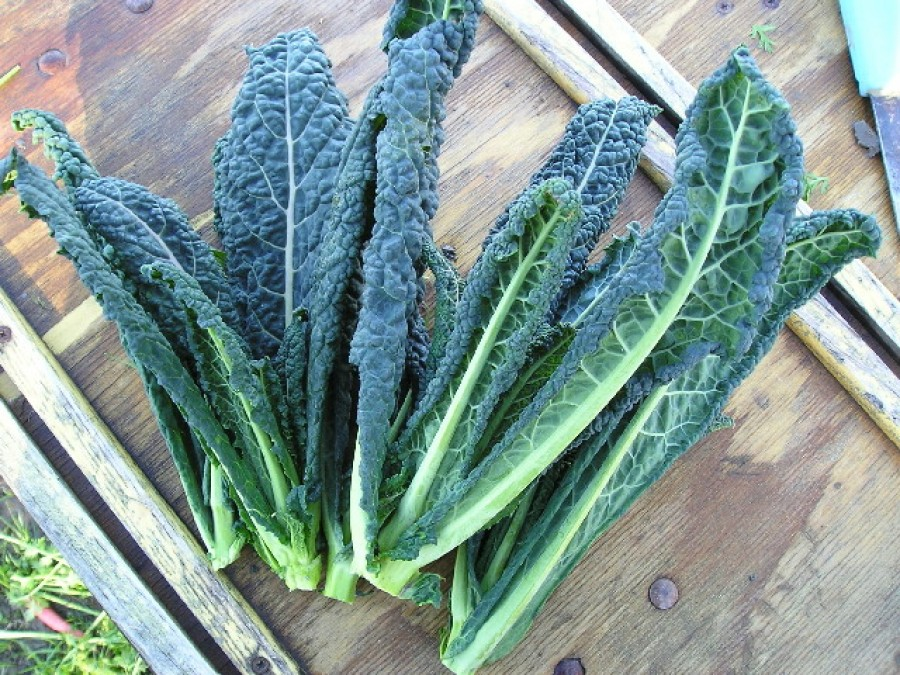 Kale nutrition facts
