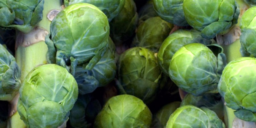 Brussel sprouts nutrition facts