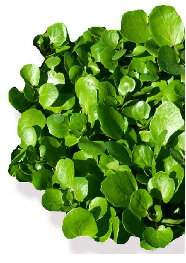 Watercress nutrition facts