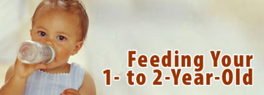 Feeding your 1 to 2 year old