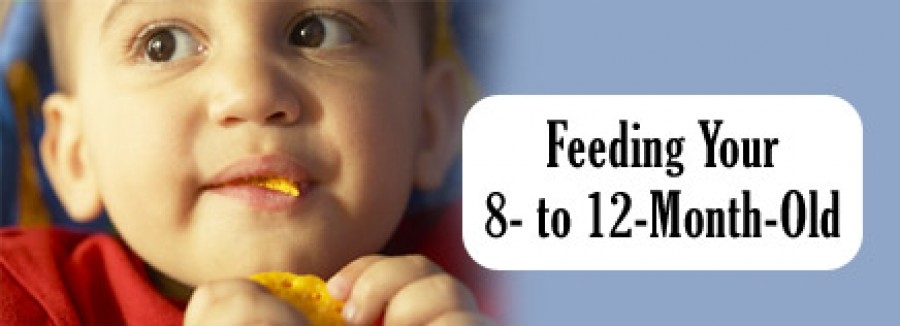 Feeding your 8 to 12 Month old