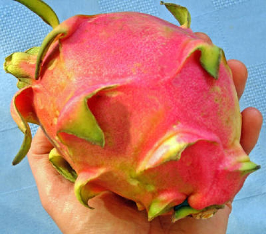 Health Benefits of Dragon fruit