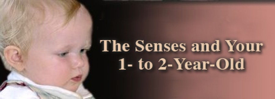 The Senses and Your 1 to 2 Years Old