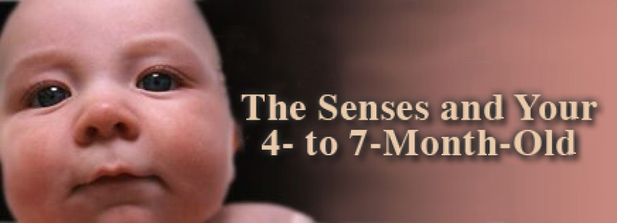 The Senses and Your 4 to 7 Month Old
