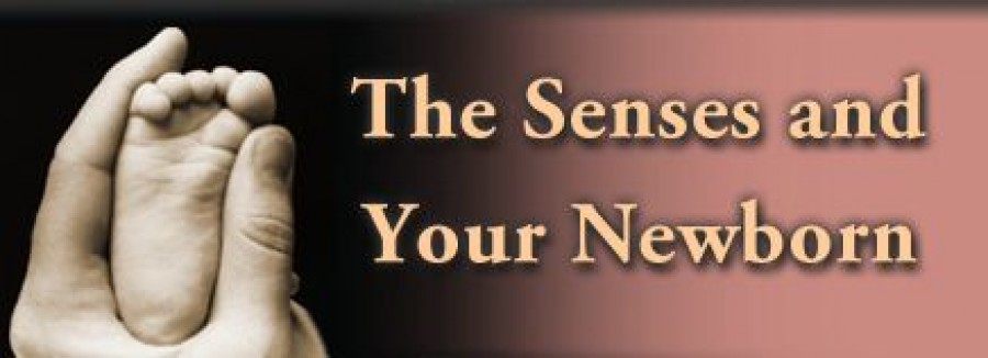 The Senses and Your New Born