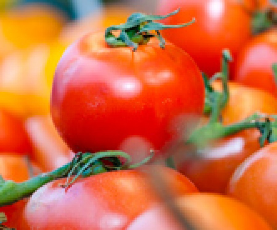 Are organic tomatoes better for your health?