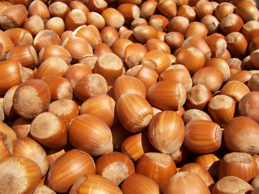 Five Reasons to Eat Hazelnuts
