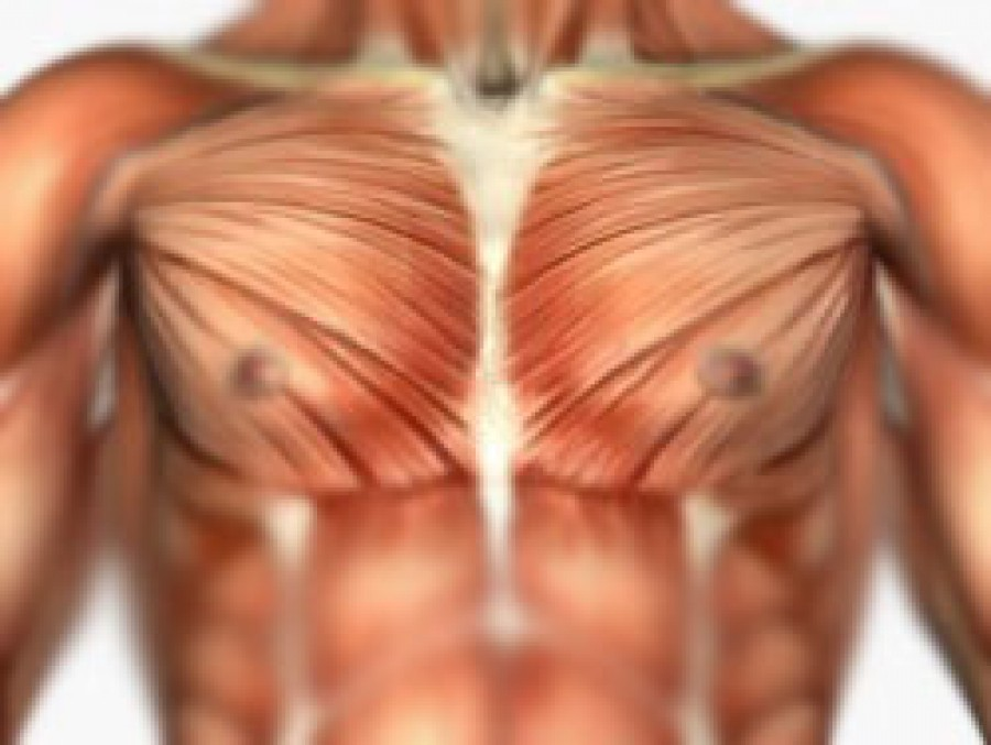 Tips To Make Your Pectoral Exercises Work Better