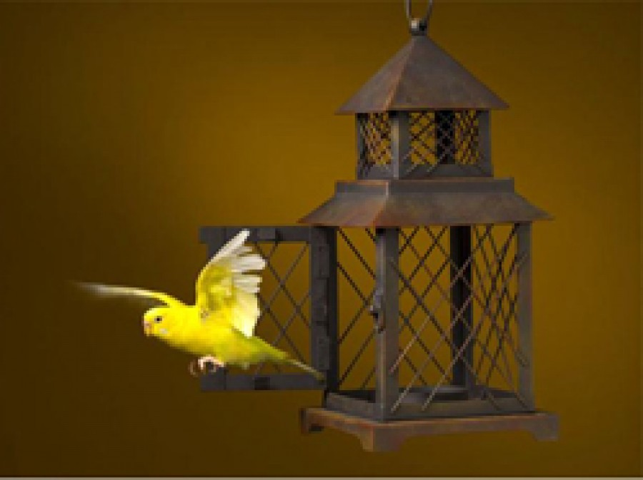 The Caged Bird Escape